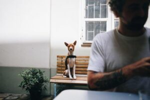 Purificador de Água Europa For Pet: um diferencial para o seu negócio.